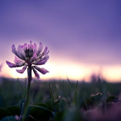 夕暮れと花の写真