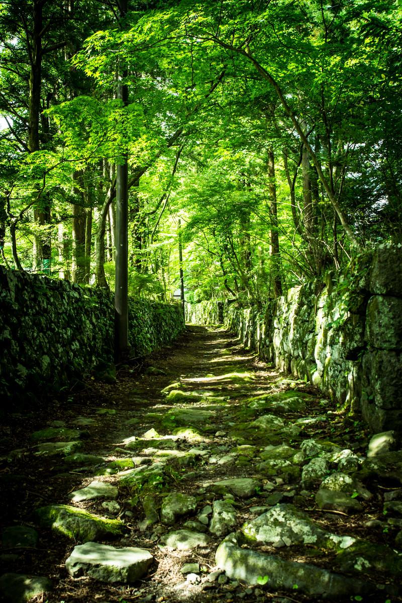 「石垣の新緑の道」の写真