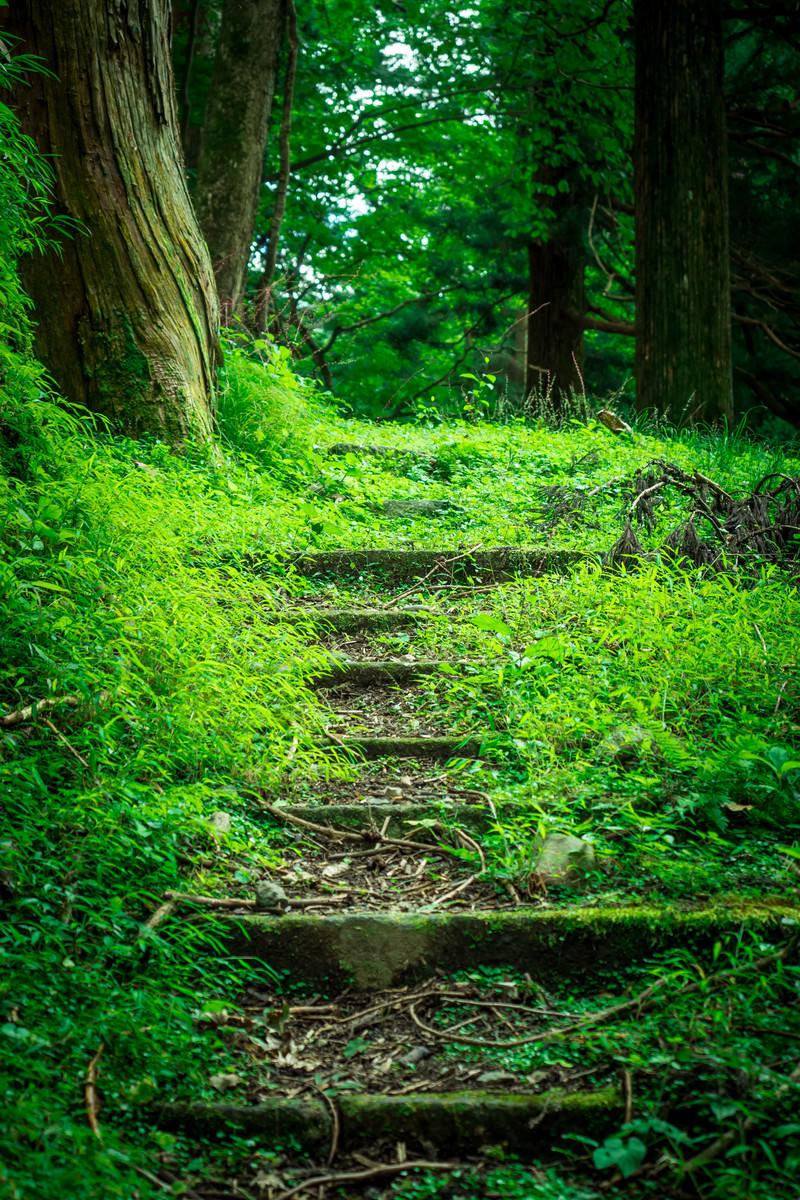 「新緑と山道」の写真