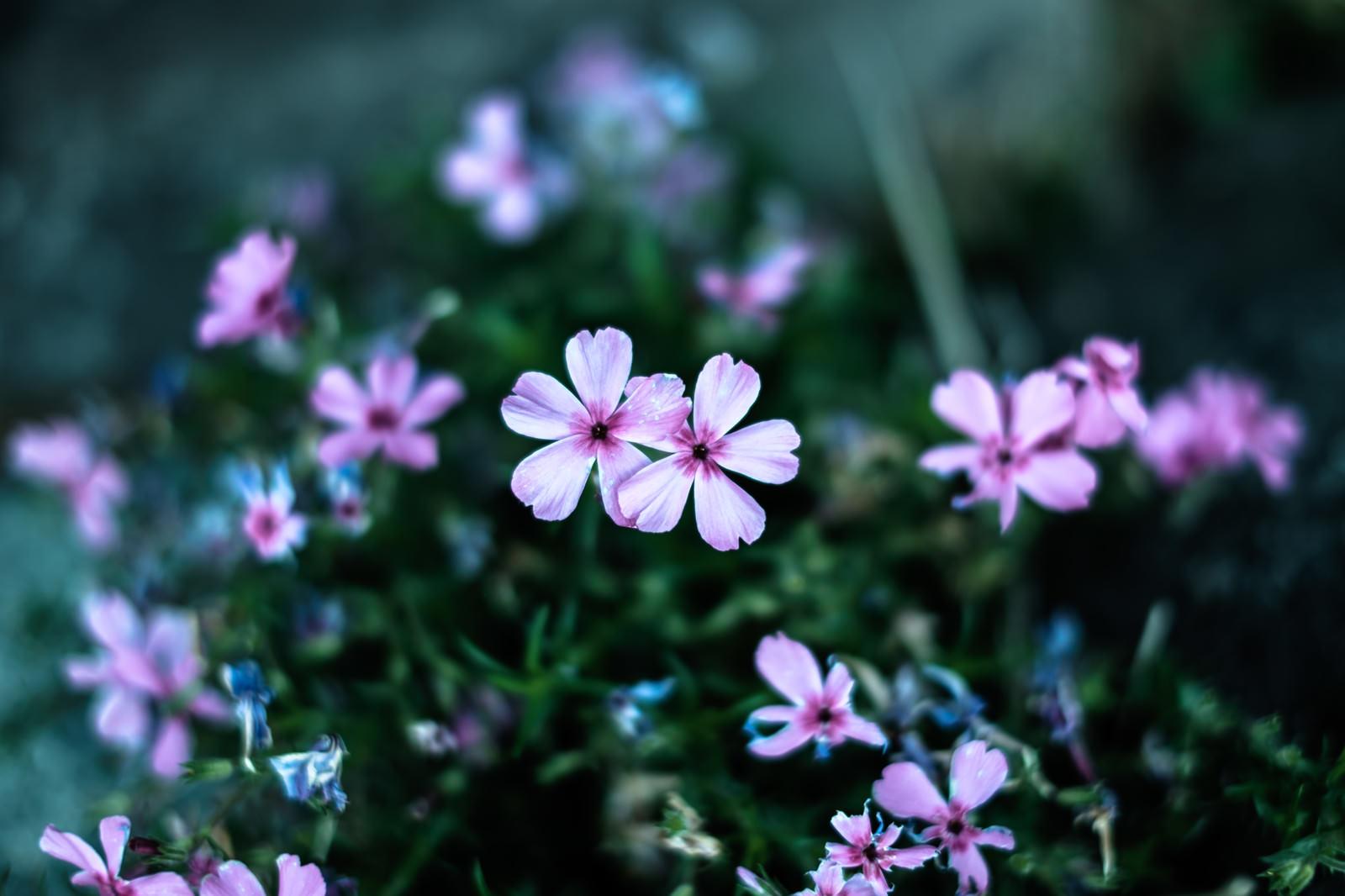 「小さいお花(雨上がり)」の写真