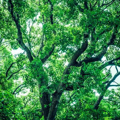 緑木の写真