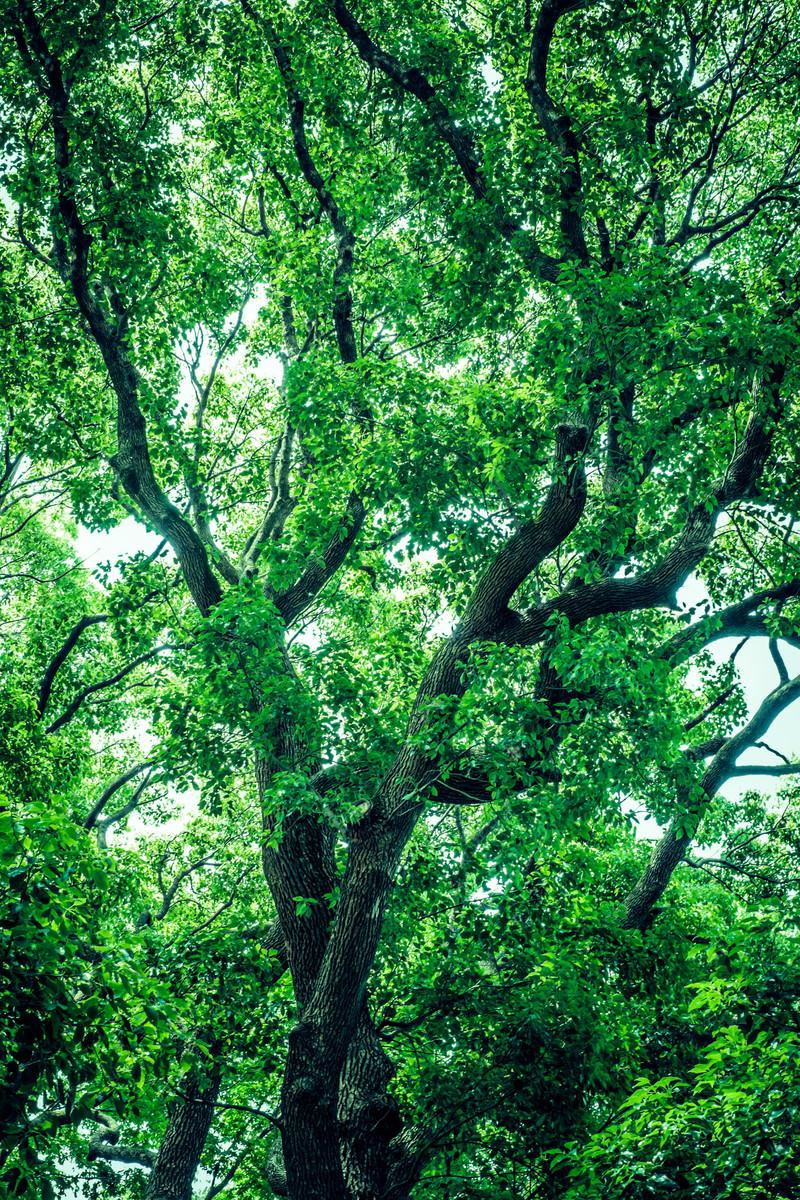 「緑木」の写真