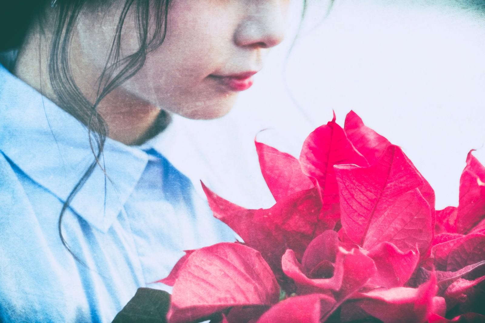 「赤いポインセチアと女性」の写真