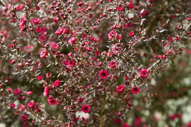 小さく咲く赤い花の写真