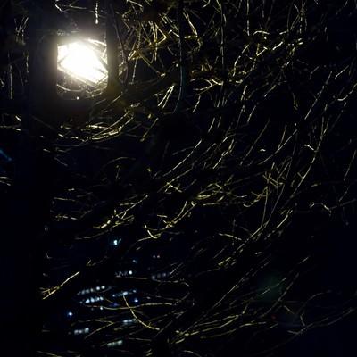 「枯木に覆われた中の街灯(夜)」の写真素材