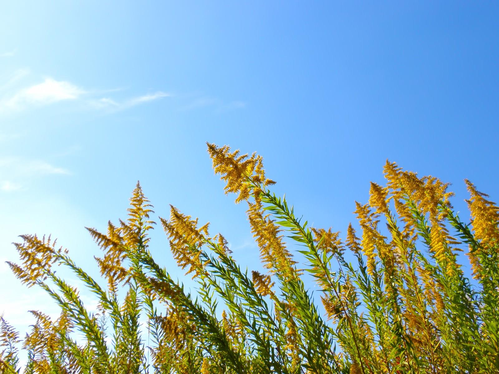 「青空と野の草」の写真