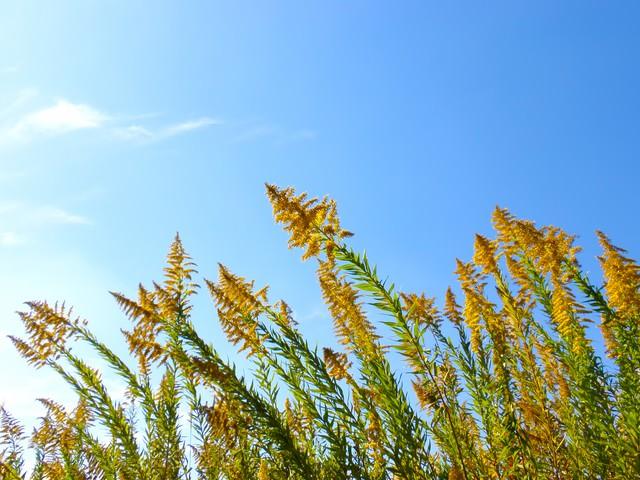 青空と野の草の写真