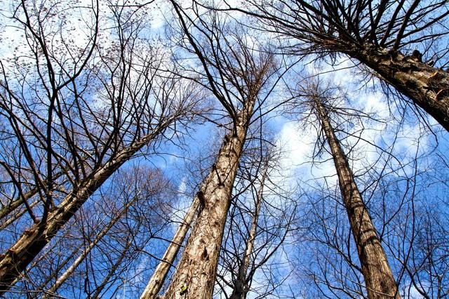 雑木林と見上げる空の写真