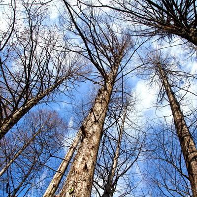 「雑木林と見上げる空」の写真素材