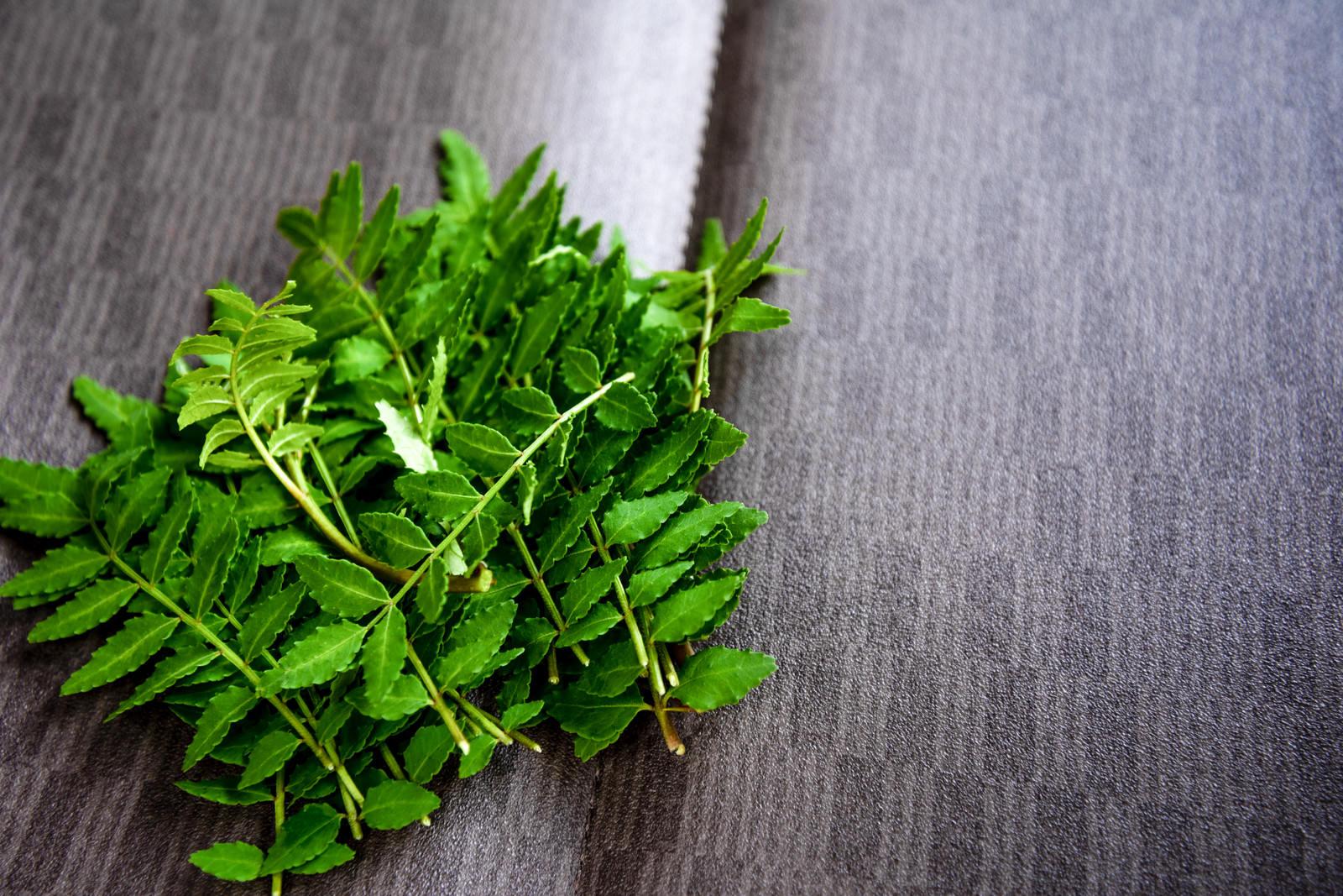 「摘んだばかりの山椒の葉」の写真