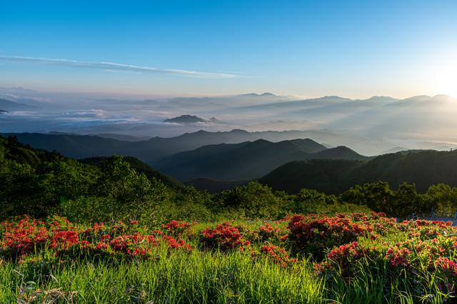 朝日に照らされる山並みと山ツツジの写真