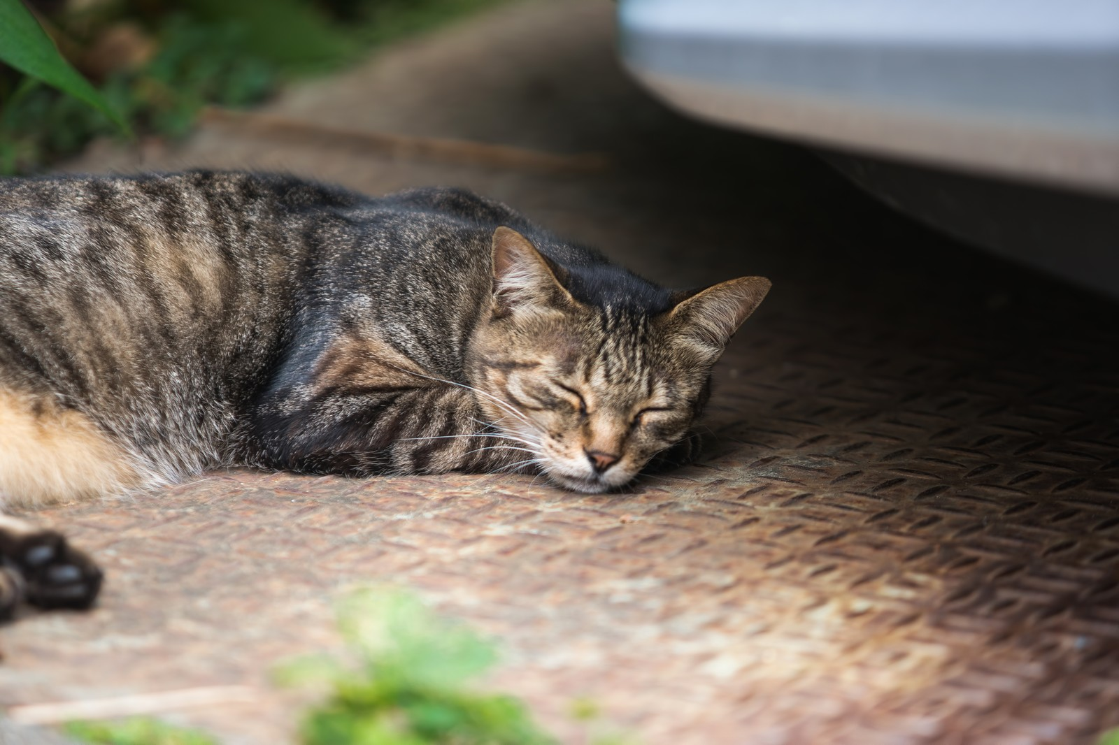 「猫の一休み」の写真