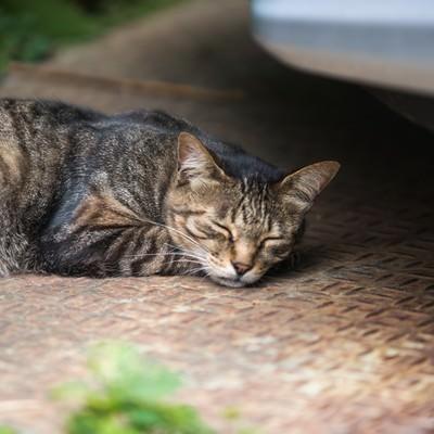 猫の一休みの写真