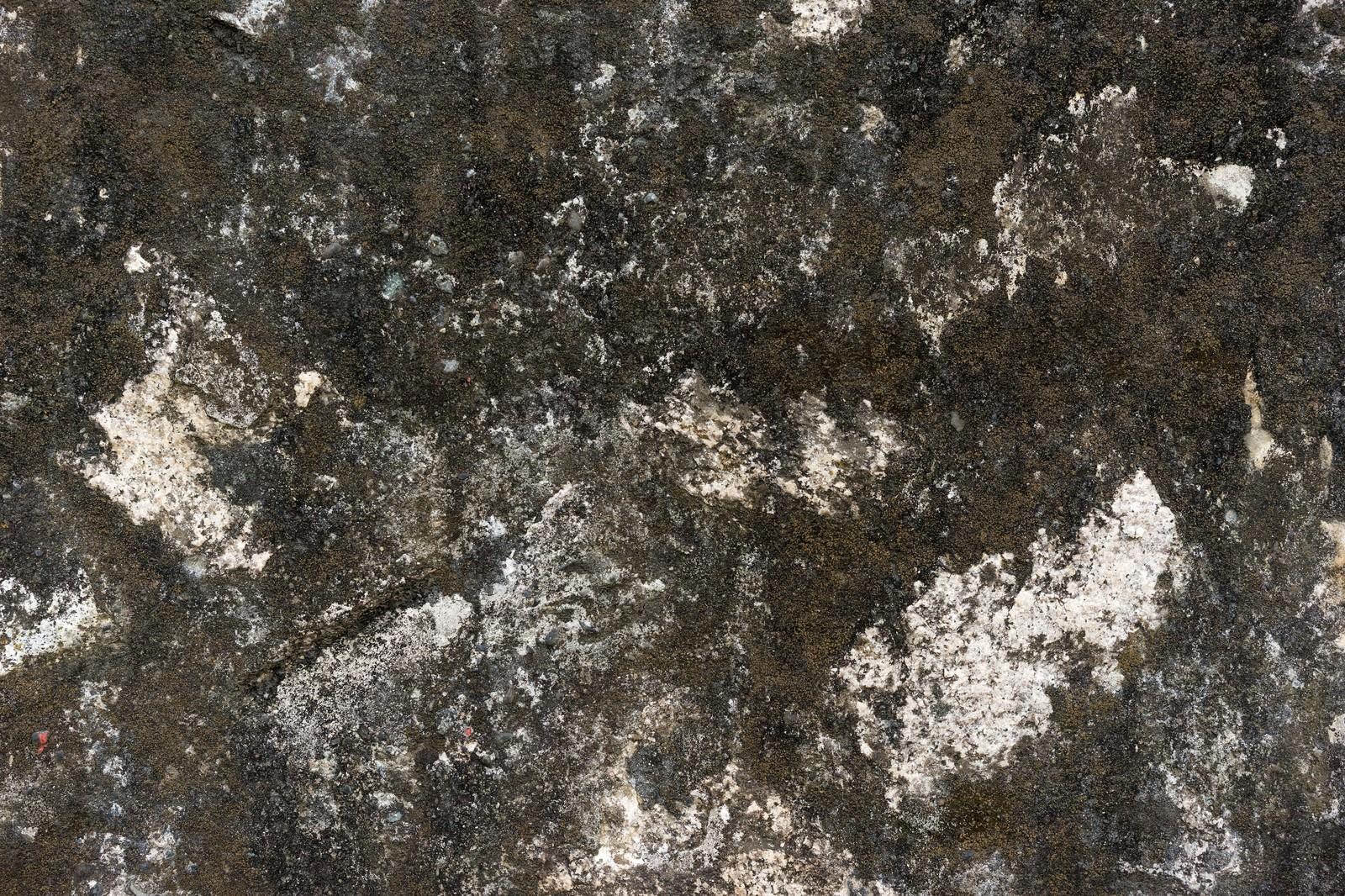 「藻が生えた壁(テクスチャー)」の写真