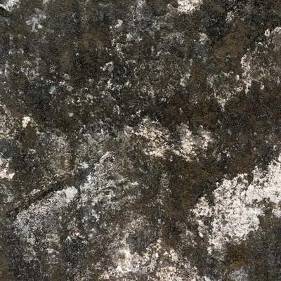 「藻が生えた壁(テクスチャー)」の写真素材