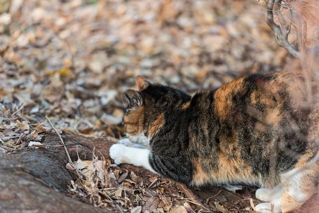 爪を研ぐ猫の写真