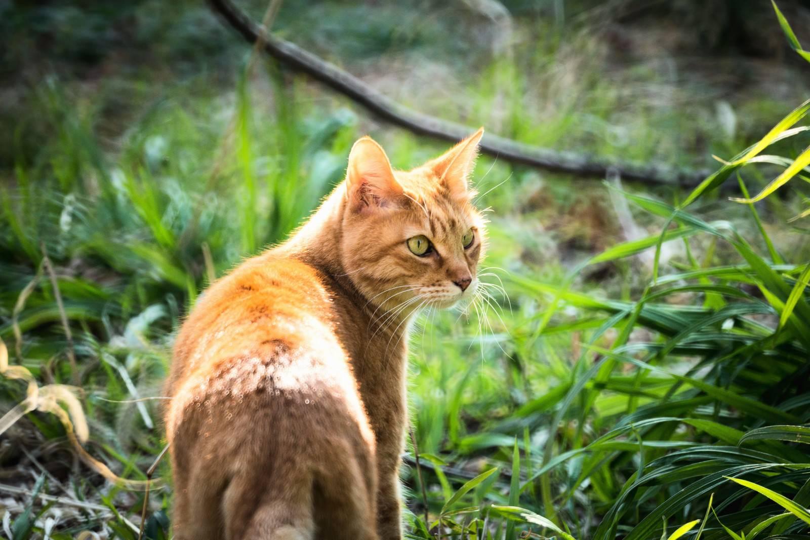 「振り返る猫振り返る猫」のフリー写真素材を拡大