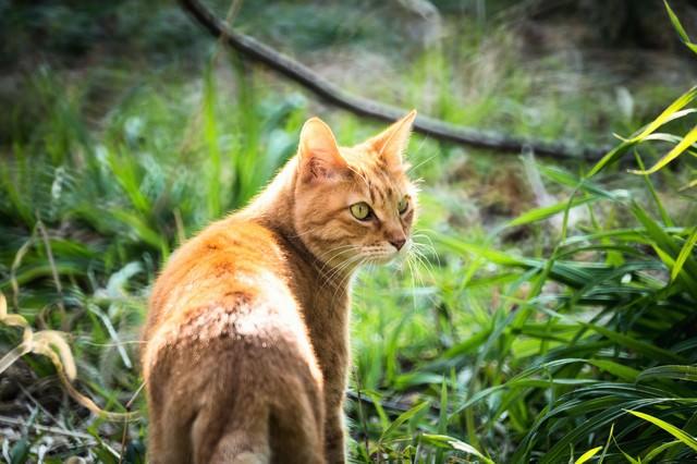 振り返る猫の写真