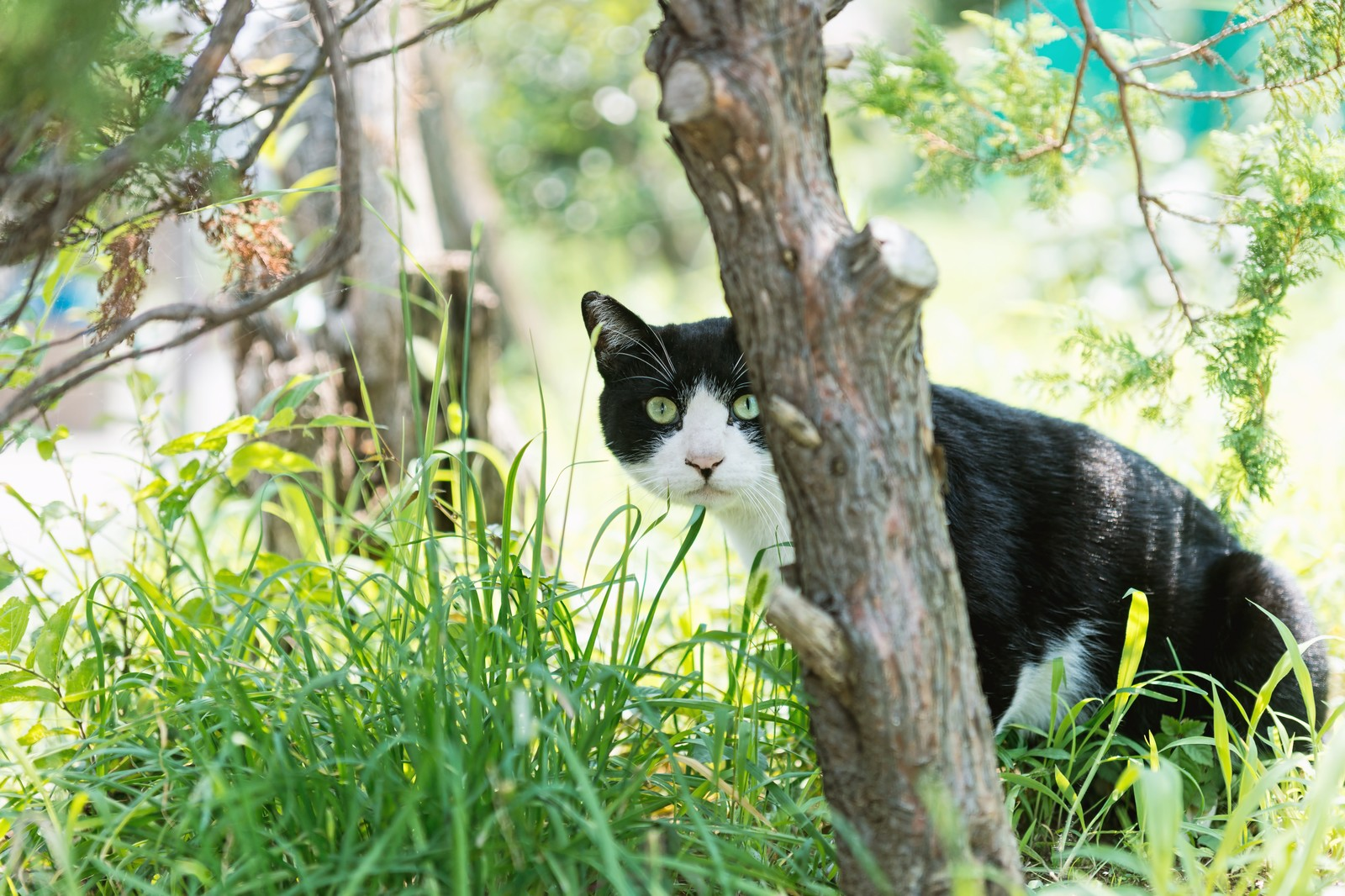 「家政婦は見た(猫)」の写真