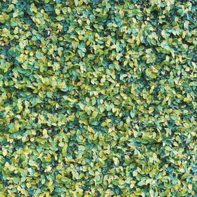 「緑の葉(テクスチャー)」の写真素材