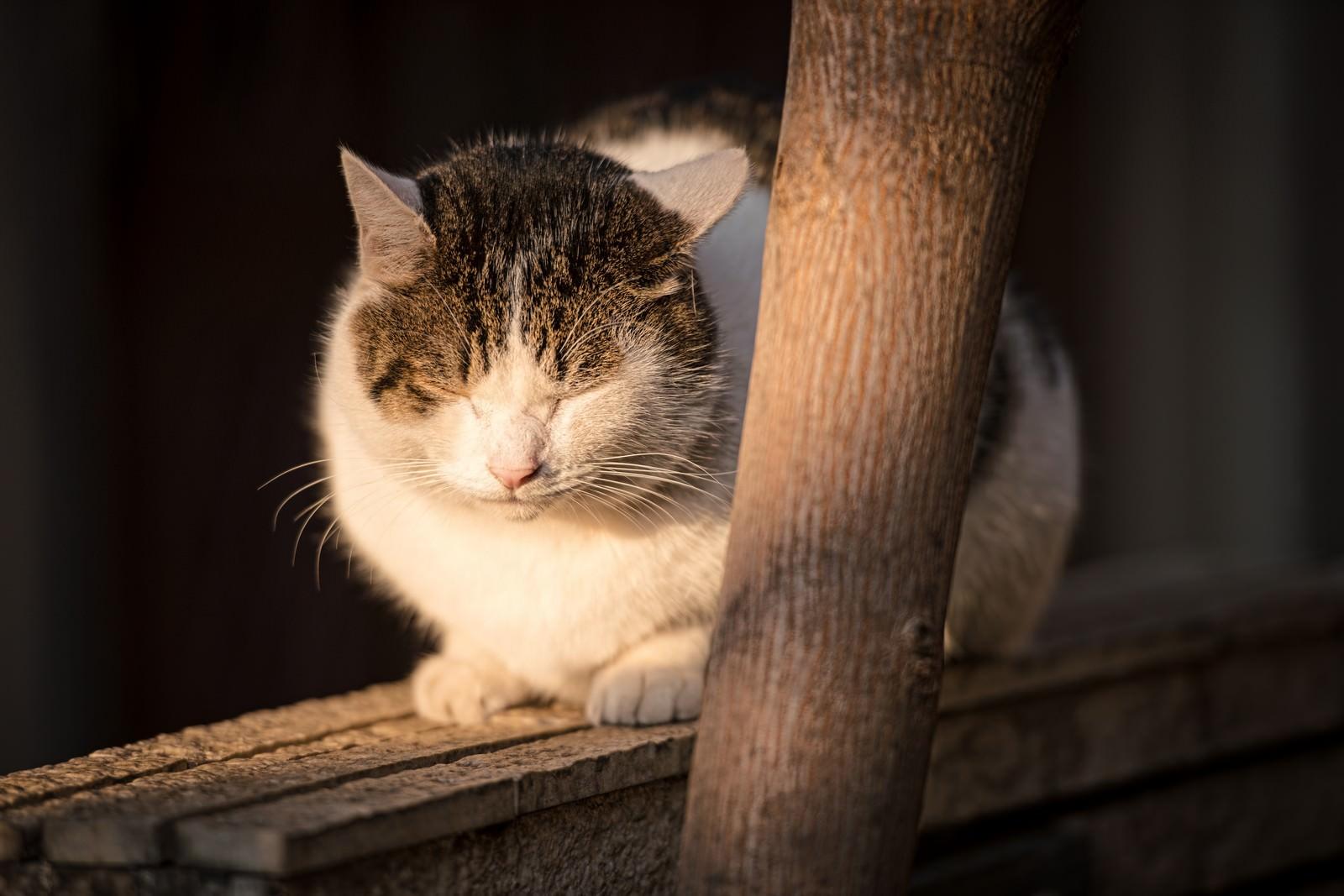 「塀の上で丸くなる猫」の写真