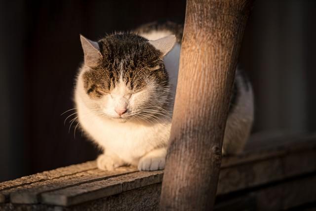 塀の上で丸くなる猫の写真