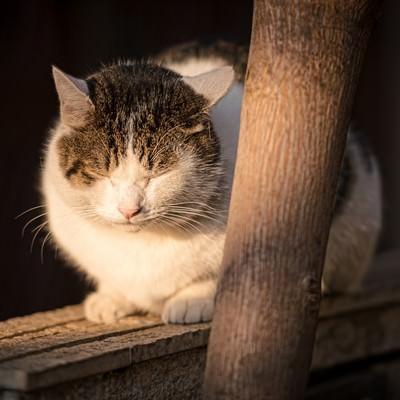 「塀の上で丸くなる猫」の写真素材