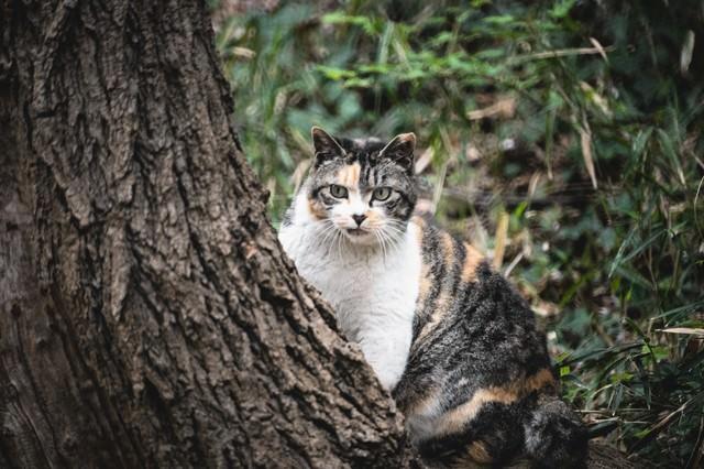 見てはいけないモノを見てしまった猫