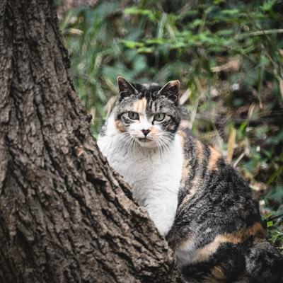 見てはいけないモノを見てしまった猫の写真