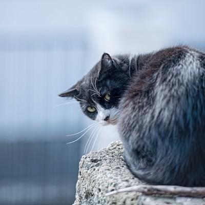 「後ろを気にする猫」の写真素材