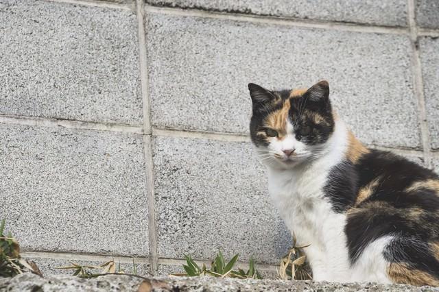 ブロック塀と野良猫の写真