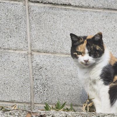 「ブロック塀と野良猫」の写真素材