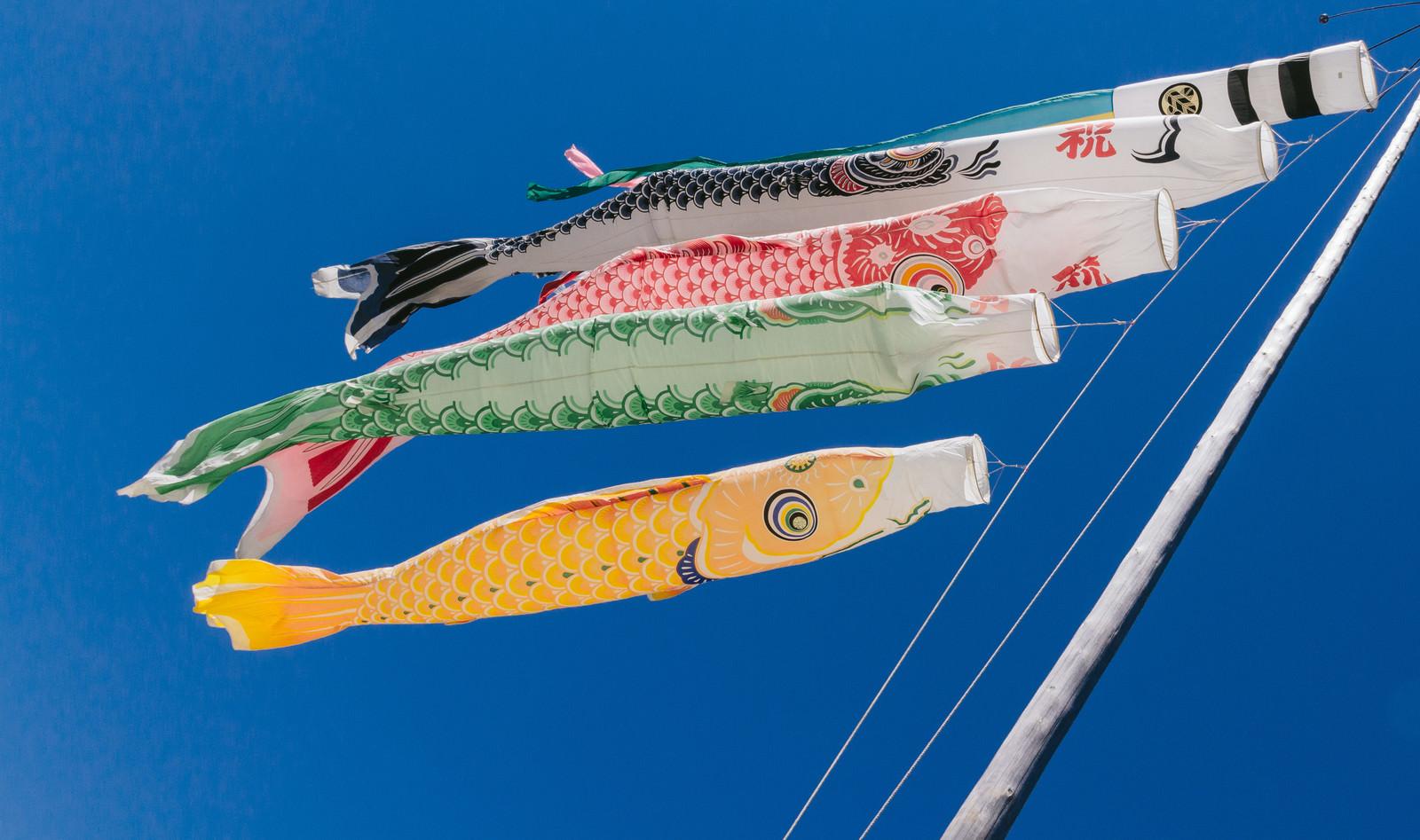 「青空と鯉のぼり」