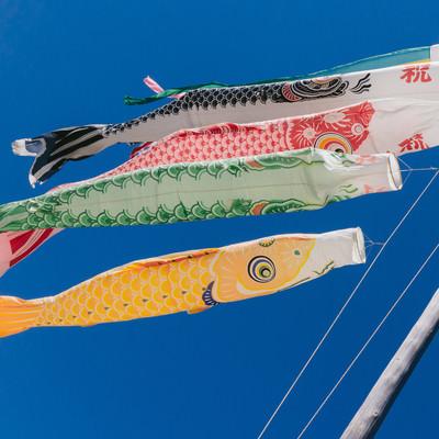 「青空と鯉のぼり」の写真素材