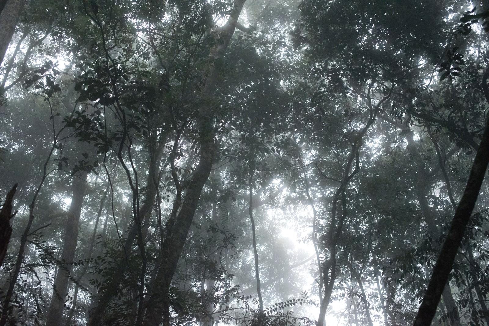 「ベネズエラの森ベネズエラの森」のフリー写真素材を拡大