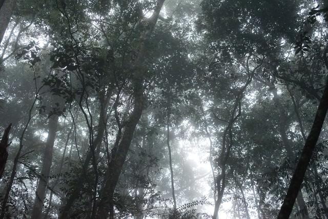 ベネズエラの森の写真
