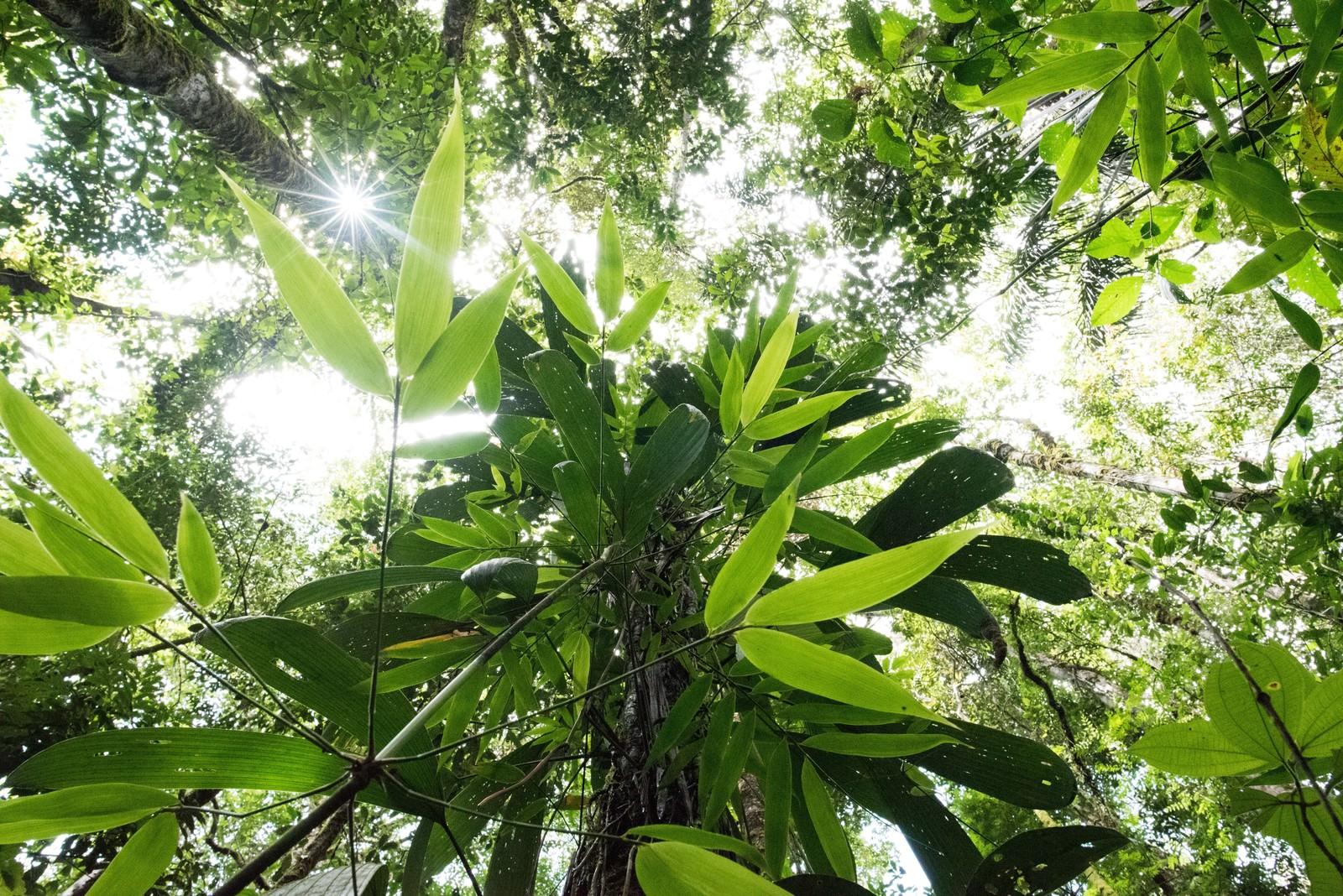 「南米の森南米の森」のフリー写真素材を拡大