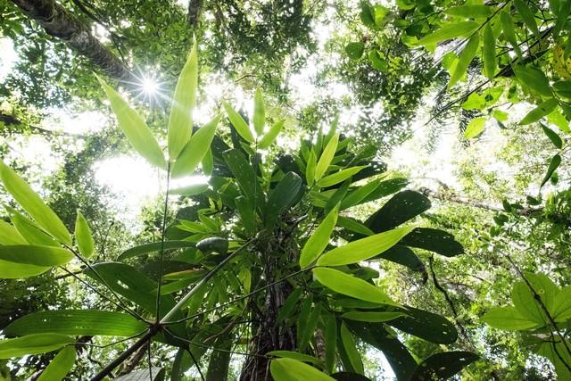 南米の森の写真