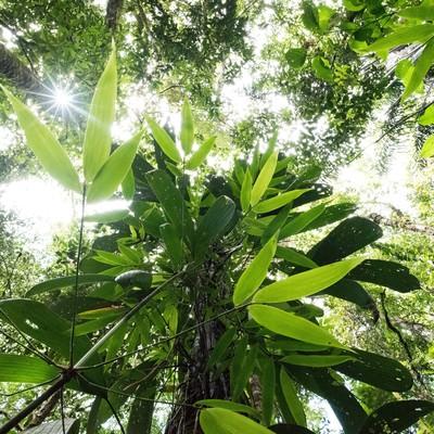 「南米の森」の写真素材