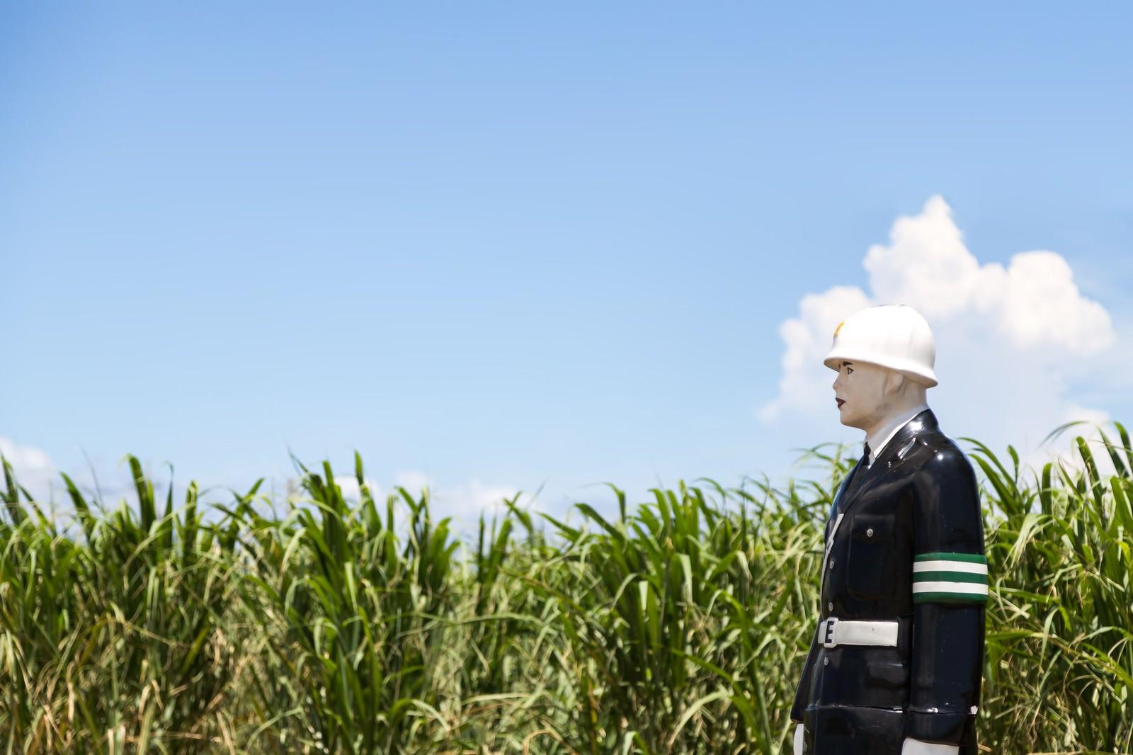 「青空とサトウキビ畑と宮古まもる君」の写真