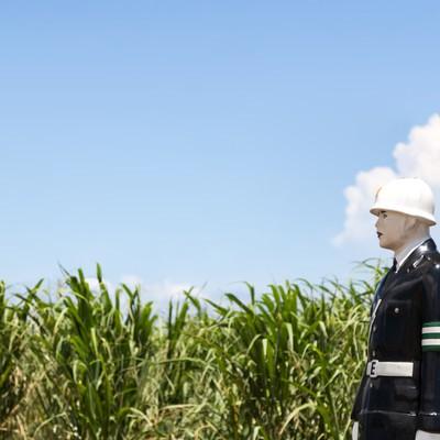 「青空とサトウキビ畑と宮古まもる君」の写真素材