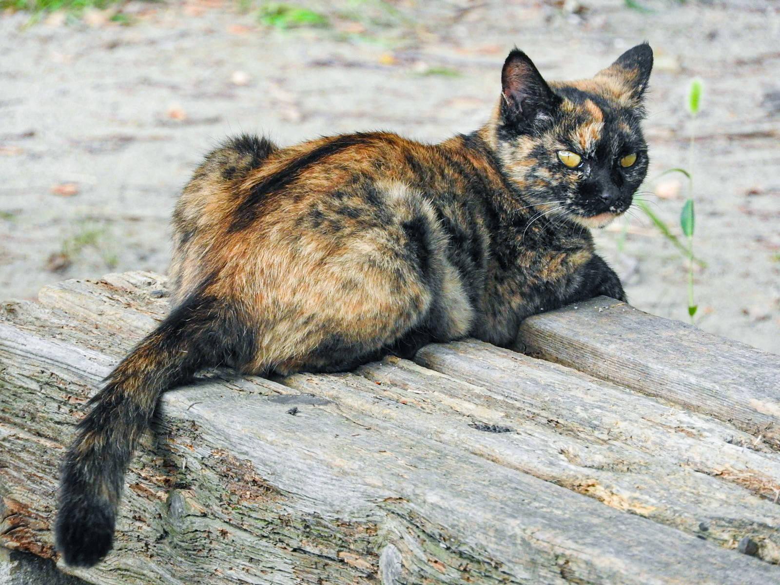 「睨みを利かす錆び猫」の写真