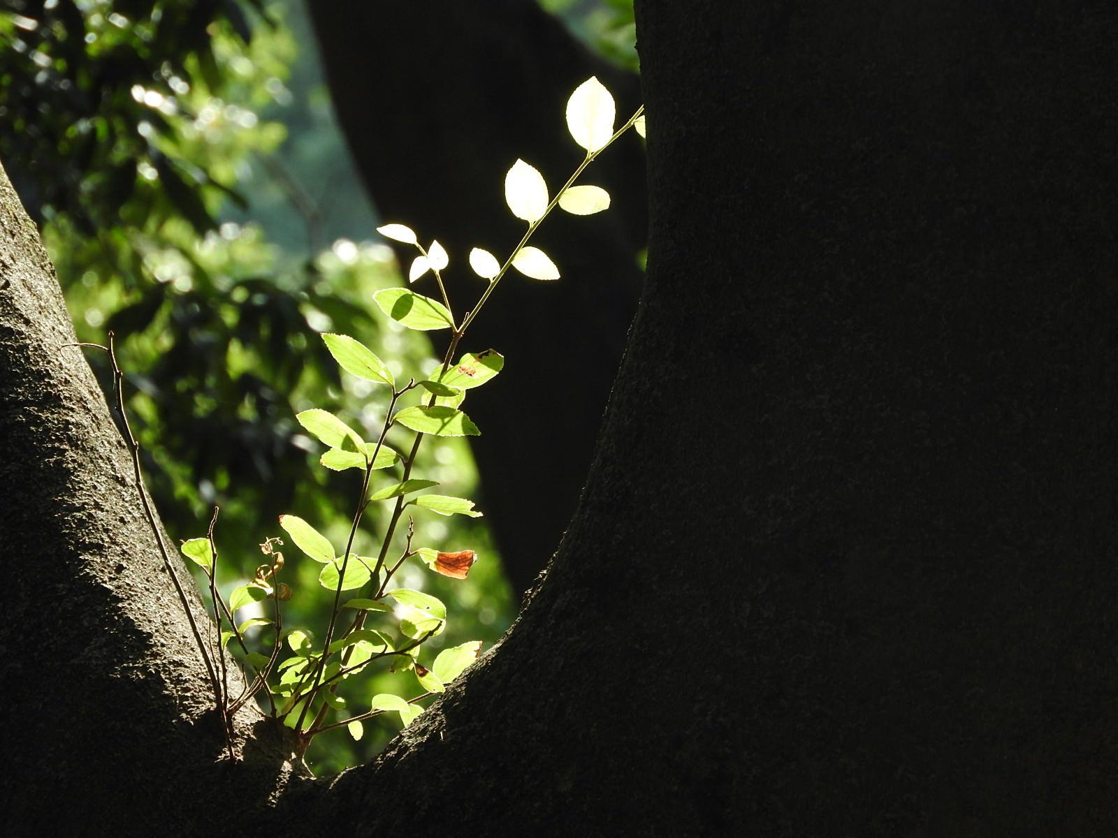 「ひだまりの枝」の写真