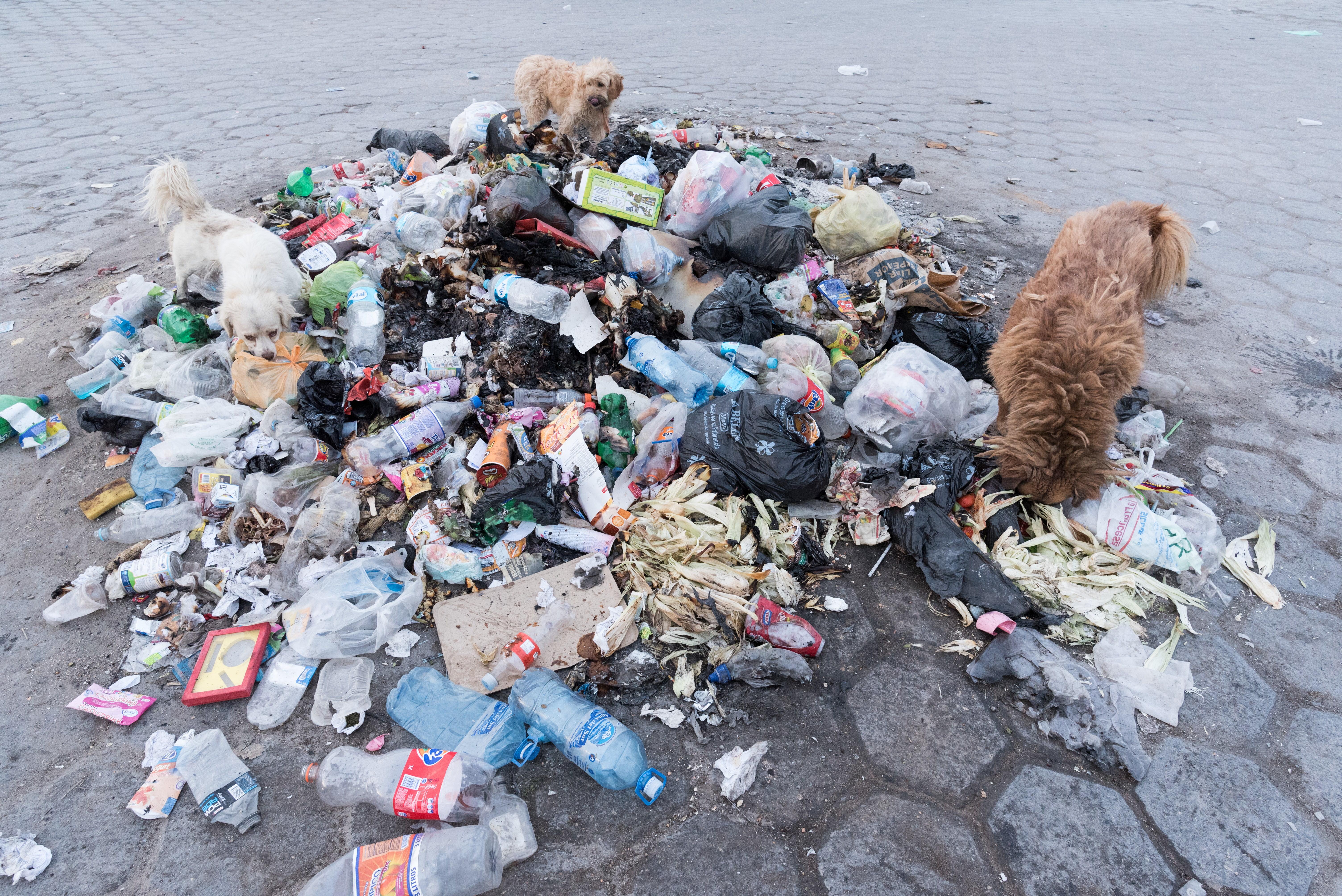 ゴミに群がる野良犬 | ぱくたそ-フリー素材