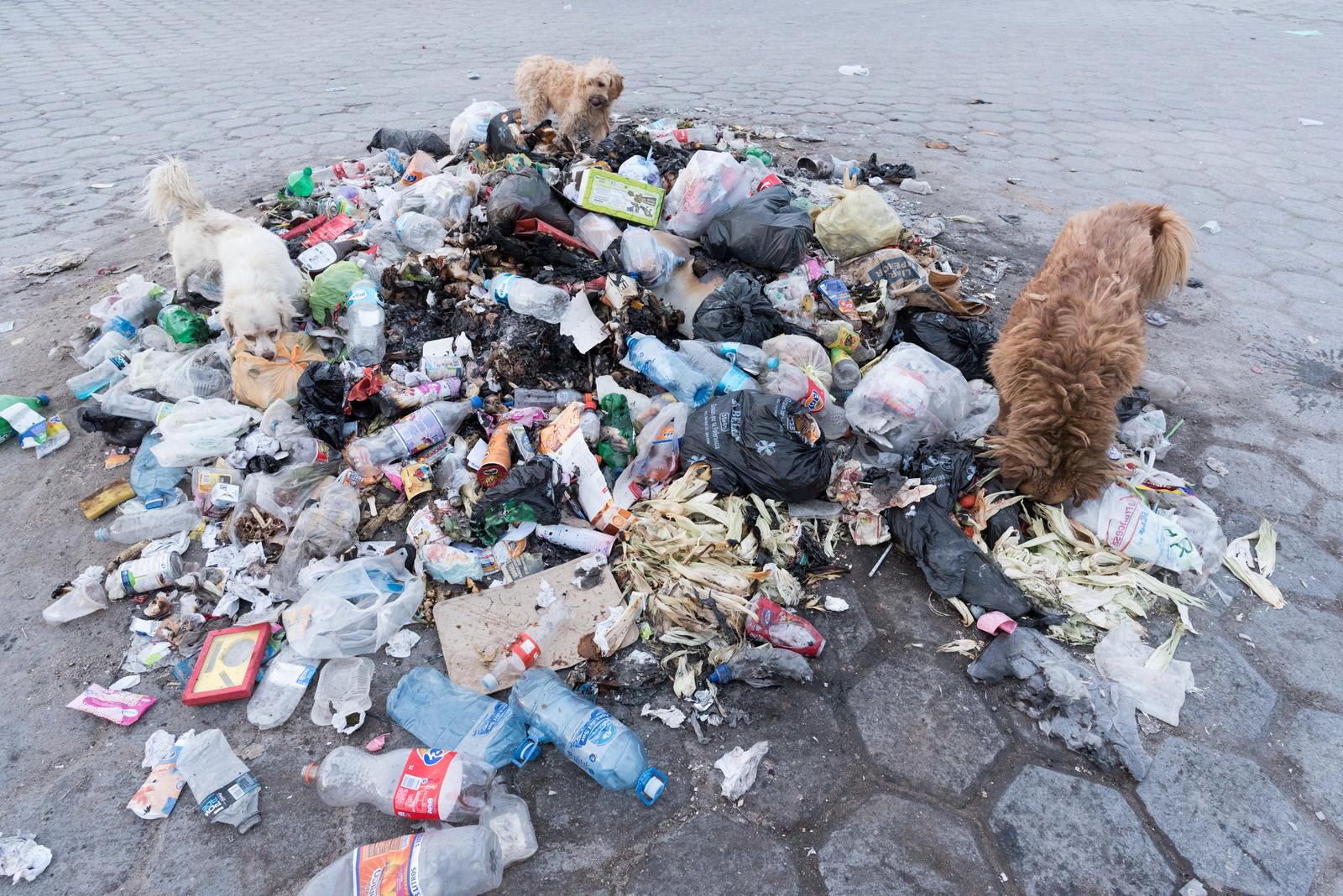 「ゴミに群がる野良犬」の写真