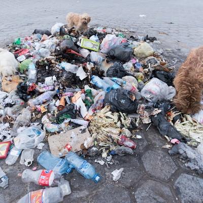 ゴミに群がる野良犬の写真