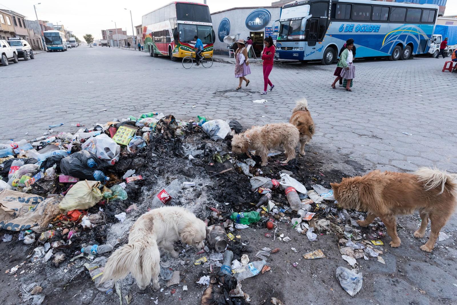 「ウユニ市の路上のゴミを漁る野犬」の写真