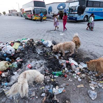 「ウユニ市の路上のゴミを漁る野犬」の写真素材