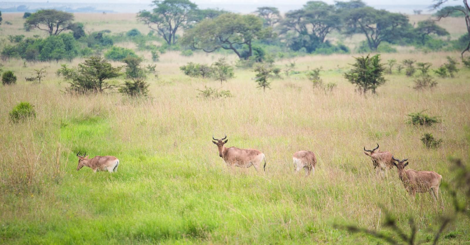 「草原を生きる野生動物の群れ」の写真