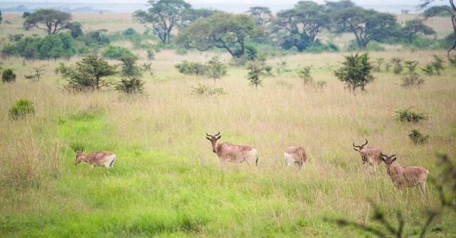 草原を生きる野生動物の群れの写真